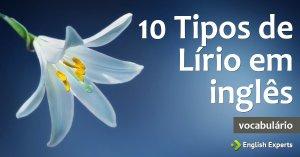 Dez tipos de Lírio em inglês