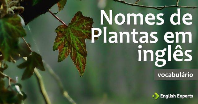 Lista de Nomes de Plantas em inglês com tradução