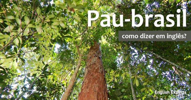 """Como dizer """"Pau-brasil"""" em inglês"""