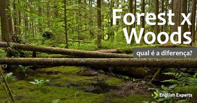 Forest x Woods - Floresta, Mata em inglês: Qual a diferença