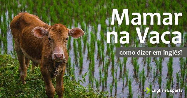 """Como dizer """"Mamar na vaca"""" em inglês"""