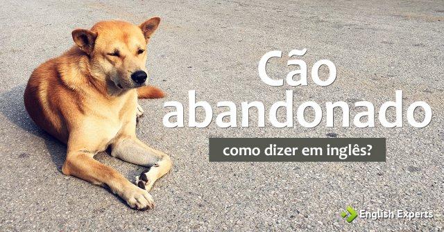 """Como dizer """"Cão abandonado; Cachorro abandonado"""" em inglês"""