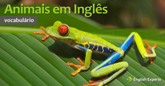Nomes de Animais em Inglês: Lista com tradução e pronúncia